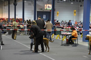 29.03.09 Internationale Dog Show in Luxemburg  Puppy Klasse:V3