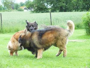 Hundecatchen