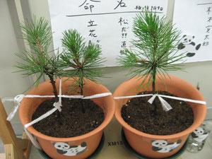 左:立花兄弟 右:直樹
