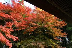 東北の四季 「秋」