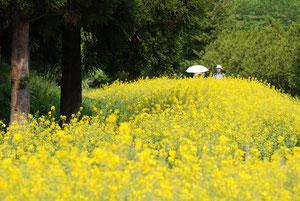 東北の四季「春」