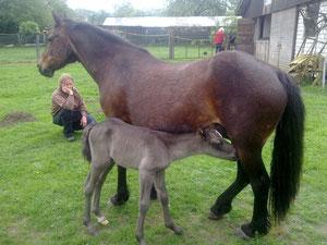 Am 09.05.2012 ist Bajou wieder stolze Mama geworden!