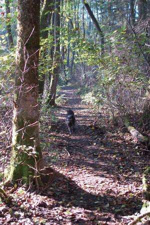 ein Stück vom Seeweg geht durch den Wald