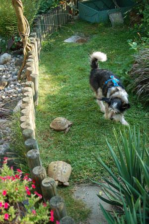 Merlin bei den Schildkröten