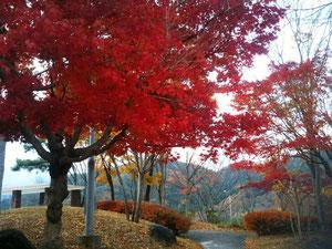 紅葉(岡山県)