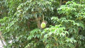 Zone de brousse pour la palmeraie
