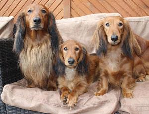 Familienfoto (v.l. Zaphir, Alf-Zaffi, Fenja)