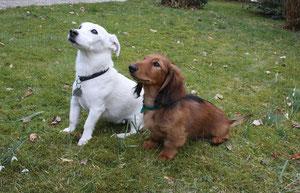 Peppi und Boss