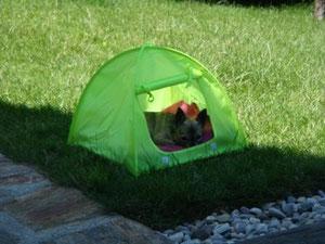 Zelt von Zooplus