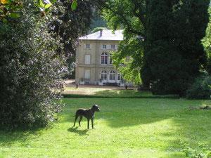 Grand parc arboré des gites de Bourguignon-sous-Montbavin près de Laon