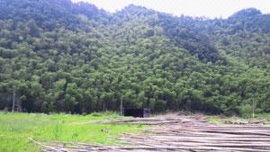 バックの山はすべて竹の山です