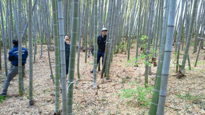 竹林の中での伐採作業は重労働です