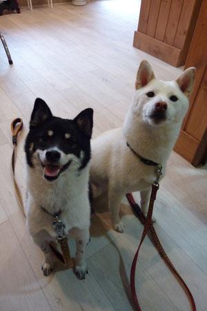 牛子ちゃん(左)ミルクちゃん(右)❤