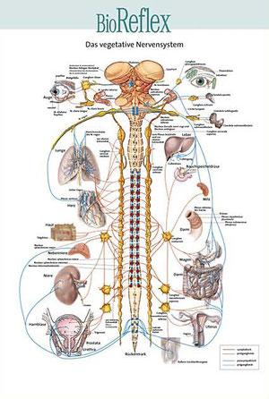 medizinische Illustrationen