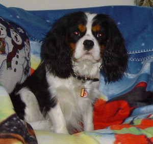 Benny - Dez. 2011