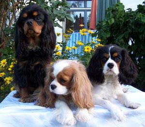 Alice, Wergenie und Babette