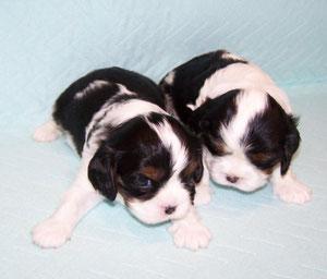 Gino und George 3,5 Wochen
