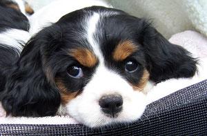 Babett 8,5 Wochen