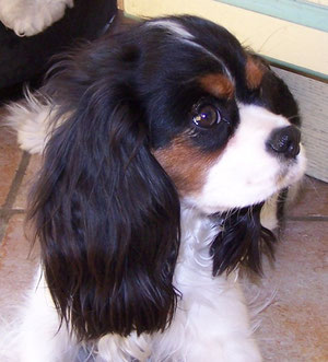 snuggly Babette 11 Monate