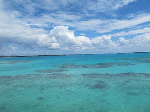 Korallen in türkisfarbenen Wasser.