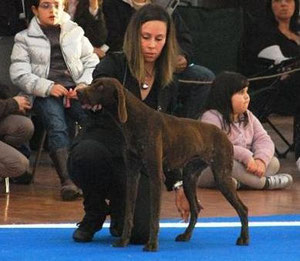 Ariel - Junior Best Of Breed Biella 2011
