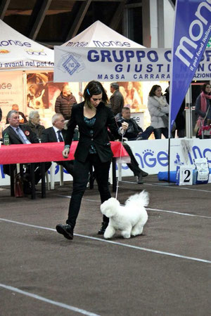 Venetian Moonlight Heather Parisi - Best of Breed Massa Carrara 2015