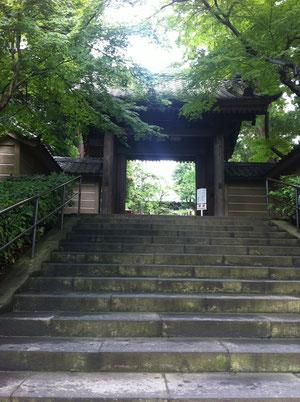 入り口の見える階段はわくわくします^^緑が綺麗