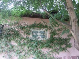 壁にはう葉が雰囲気を出していた