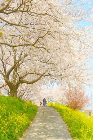 木漏れ日が桜色でさくらの花びらのよう。綺麗な場所なので、シャッターを切るだけで素敵な生け花に。