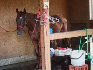 これはガルシアではない^^ 馬小屋にてメスのお馬さん