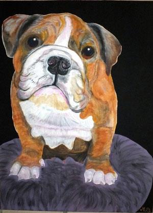 Bulli (französisches Bulldoggenkind)