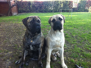 Fiona 2  ans et Gus 6 mois