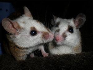 Susi (links) und Poldi