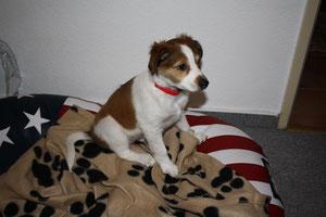 Amie (genannt Coco) im neuen Heim