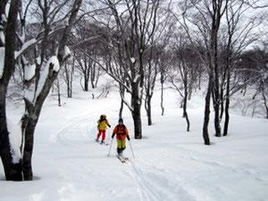 雪化粧の木々の中を