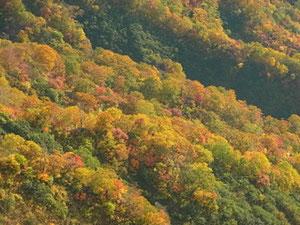 下山途中、向かい側斜面の紅葉アップ