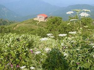 3日目 観光新道のお花を楽しんで。殿ケ池避難小屋を写す