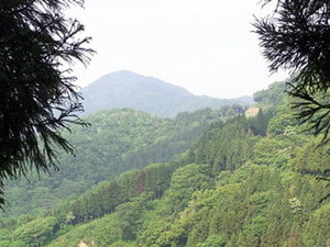 少し登ると墓谷山が見える。あそこまで行けるかな?
