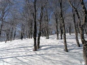 青空にブナ林、気持ちの良い斜面です