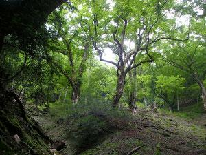 現れた谷源頭の巨木林