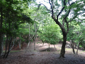 迷いやすい地蔵峠~横谷峠