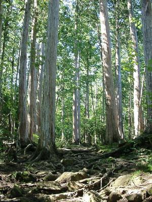 無垢の木の画像