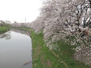この写真は3月23日撮影