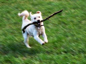 Fit wie mein Hund Gino - gelange über Gino zu XANTARA ARTGERECHTE TIERNAHRUNG