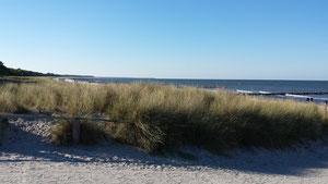 Bild: Ferienwohnung Ostsee Zingst Buchungskalender