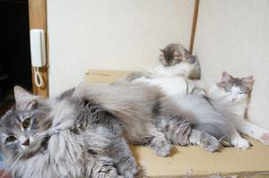 猫密集地帯。