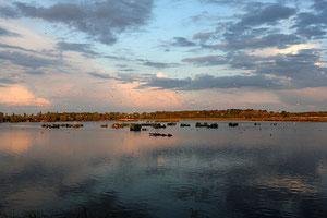 Ambiance du soir sur un étang...