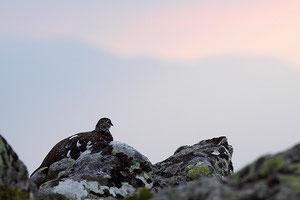 Le petit caillou des Alpes regardant l'horizon rosissant....