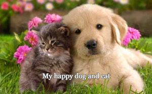 casas de vacaciones que admiten mascotas