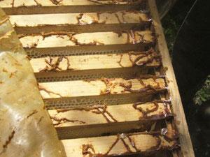 L'intérieur de notre ruche